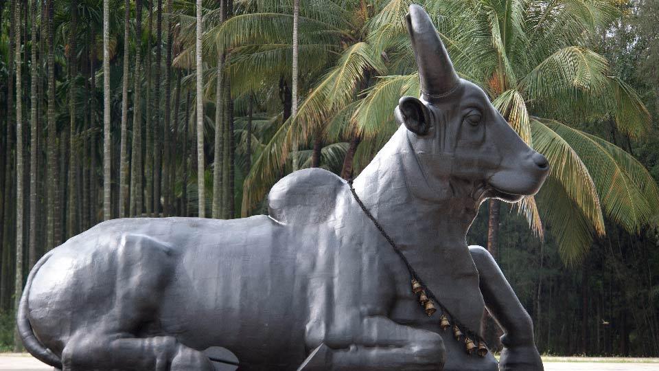 是什么使Nandi成为冥想的公牛?