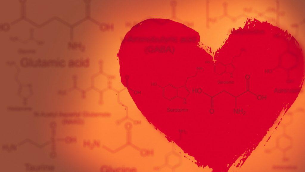 从化学到爱,从爱到化学
