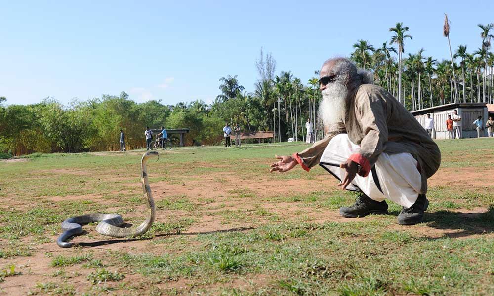 萨古鲁生命中的蛇【多图】