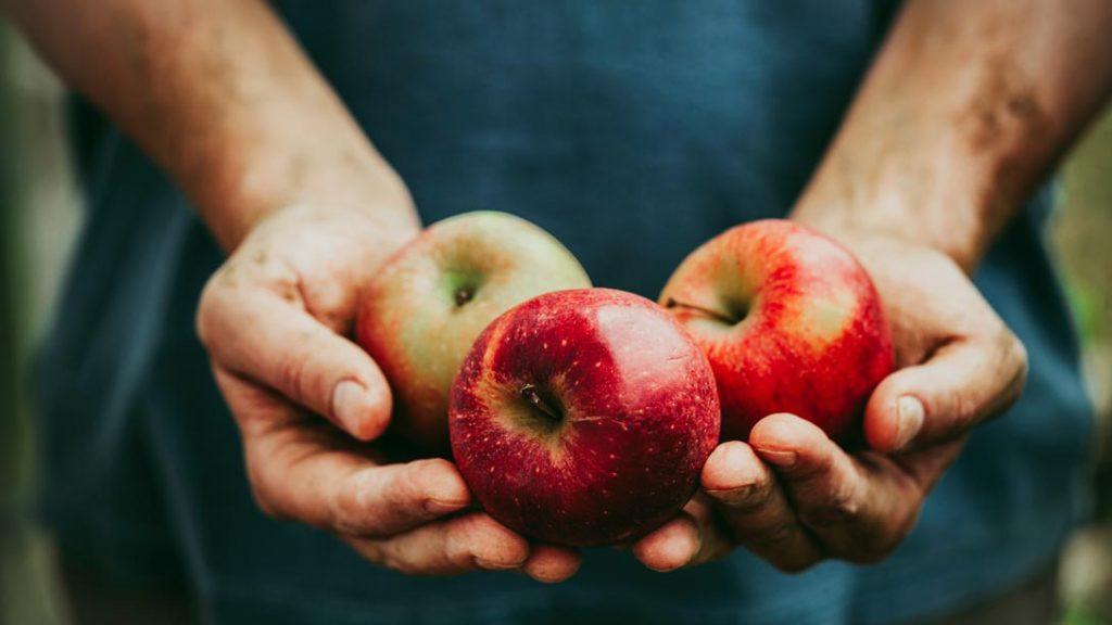 我们该吃什么:选择正确的食物非常重要