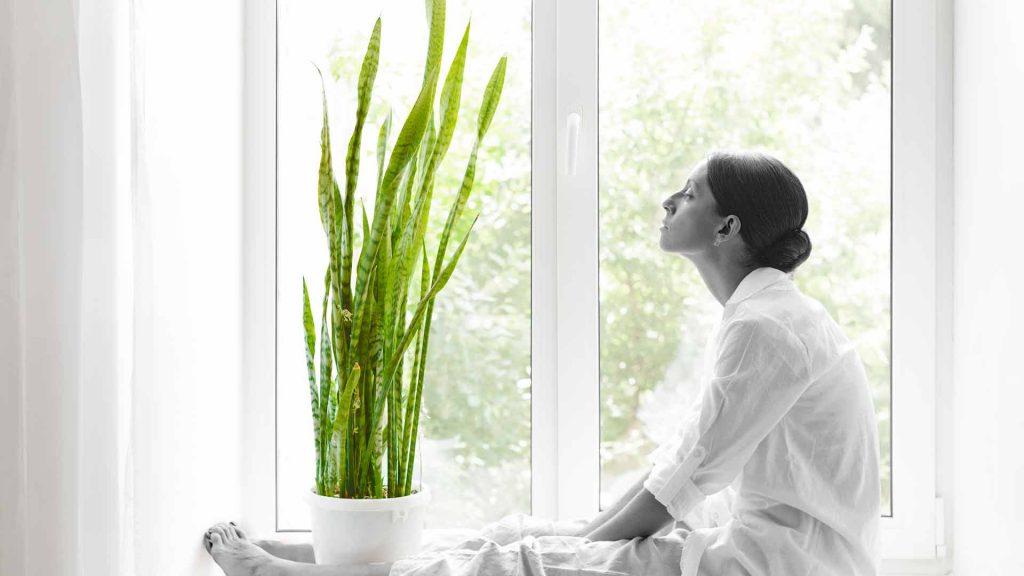 """共同战""""疫""""丨家中可以帮助净化空气的三种植物"""