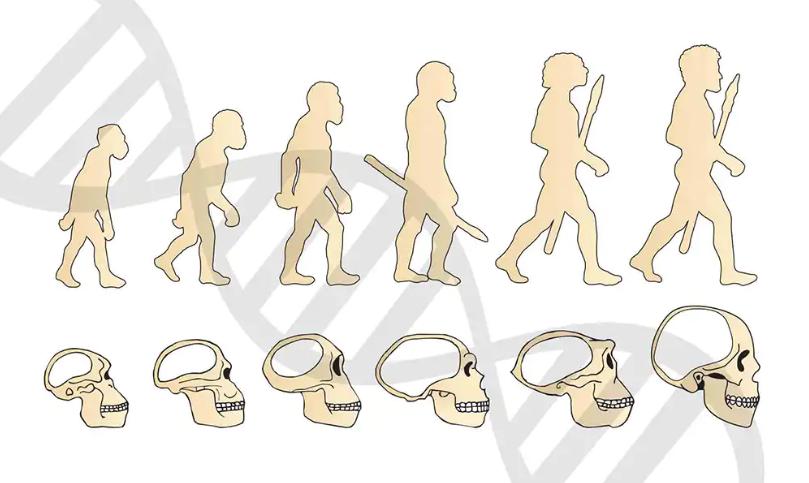 萨古鲁:人类还能够进化吗?答案可能出乎意料
