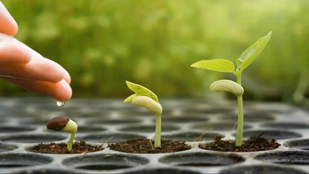 """灵性成长的三个""""I"""":让神性的种子生长"""
